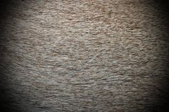 Roe deer textured pelt Royalty Free Stock Photography