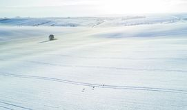 Aerial shot of roe deers running through a snow-covered field of South Moravia, Czech Repiblic royalty free stock image