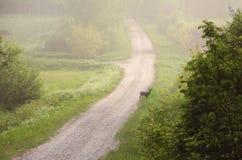 Roe rogacz w mgle Zdjęcia Royalty Free