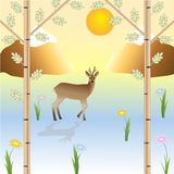 The roe in the wild nature. Vector Stock Photo