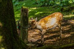 Roe in Wildpark Neuhaus. Wildpark Neuhaus,Park full of animals un Germany Stock Photography