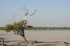 Roebuck Bay Marsh, Broome, Australia Royalty Free Stock Photography