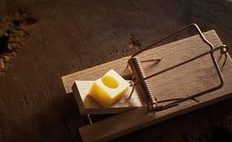 Roedor ou controlo de pragas de DIY em casa imagens de stock royalty free