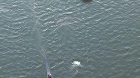 Roeiende die bemanning door boot wordt gevolgd stock footage