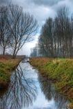 Roeier in een moeras Stock Foto's