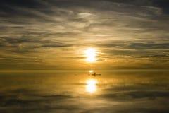 Roeispaanboot in de zonsondergang Stock Fotografie