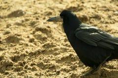 Roek in het zand Stock Afbeelding
