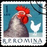 ROEMENIË - CIRCA 1963: De postzegel die in Roemenië wordt gedrukt, toont kip Royalty-vrije Stock Foto's