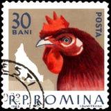 ROEMENIË - CIRCA 1963: De postzegel die in Roemenië wordt gedrukt, toont kip Stock Foto's