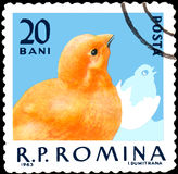 ROEMENIË - CIRCA 1963: De postzegel die in Roemenië wordt gedrukt, toont kuiken Royalty-vrije Stock Fotografie