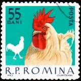 ROEMENIË - CIRCA 1963: De postzegel in Roemenië wordt gedrukt, toont haan die Stock Foto's