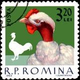 ROEMENIË - CIRCA 1963: De postzegel in Roemenië wordt gedrukt, toont haan die Stock Fotografie