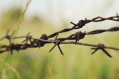 Roestig die prikkeldraad in een gras wordt verborgen Royalty-vrije Stock Afbeelding