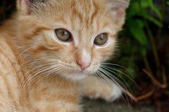 Roestig katje royalty-vrije stock afbeelding