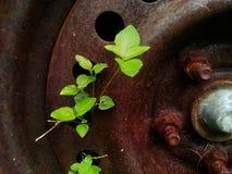 Roestig metaal met gaten en installatie het groeien door de openingen Stock Fotografie