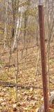 Roestig prikkeldraad in het bos stock fotografie