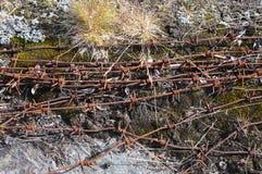 Roestig prikkeldraad onder stenen en mos Stock Fotografie