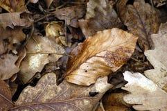 Roestige bladeren Stock Afbeeldingen