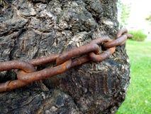 Roestige die ketting op een boomboomstam wordt verpakt Royalty-vrije Stock Afbeeldingen