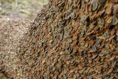 Roestige die muntstukken in een boom worden gehamerd royalty-vrije stock fotografie