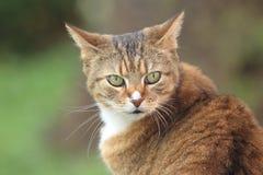Roestige kat Stock Afbeeldingen