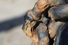 Roestige kettingen van een brughefboom Stock Foto's