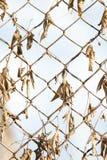 Roestige omheining met droge bladeren Stock Fotografie