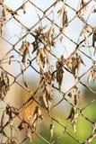 Roestige omheining met droge bladeren Royalty-vrije Stock Afbeeldingen