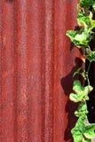 Roestige zinkbladen Stock Foto
