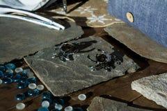 Roestvrije krabben Royalty-vrije Stock Fotografie