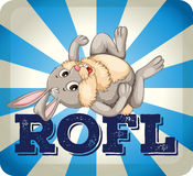 ROFL expression with rabbit Royalty Free Stock Images