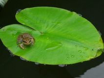 Rog в болоте Стоковое Изображение