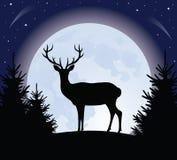 rogacz księżyc Fotografia Royalty Free