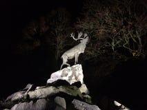 Rogacz na falezach przy nocą zdjęcie royalty free