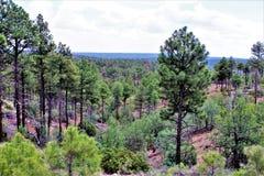 Rogacz Skacze światopogląd, Apache Sitgreaves las państwowy, Navajo okręg administracyjny, Arizona, Stany Zjednoczone obraz stock
