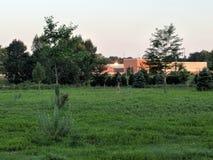 Rogacz w polu obok szkoły średniej Obraz Royalty Free