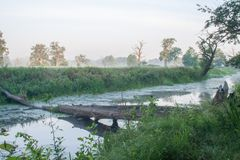 Rogalin Landscape Park - aoxbow lake in the mist sunrise with tree in lake stock photos