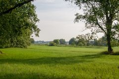 Rogalin oaks national park meadow in early morning sun royalty free stock photography