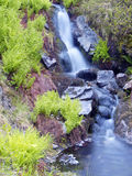 rogen Швеция природных ресурс ресурсов папоротника brooklet Стоковая Фотография RF