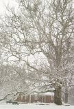 Roger Williams Park. In Providence, Rhode Island looks so peaceful as it is covered with snow Stock Image