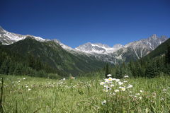 Rogers Pass - focus on flowers Stock Photography
