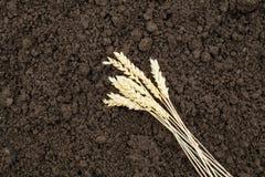 Roggeoor op achtergrondgrond Oogst graan en oor op bruine achtergrond stock foto