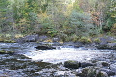 Rogie Falls / Waterfall Royalty Free Stock Images