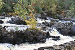 Rogie Falls / Waterfall Royalty Free Stock Photography