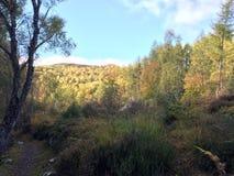 Landscape around Rogie Falls / Waterfall Royalty Free Stock Photos