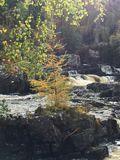 Rogie Falls / Waterfall Stock Images