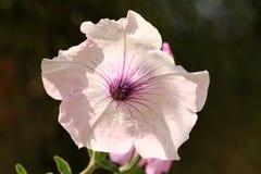 Rogu kwiat Zdjęcie Stock