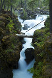 Rogue River Falls Stock Image