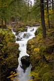 Rogue River Gorge Stock Image