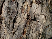 Roguh di marrone di struttura dell'albero Fotografia Stock